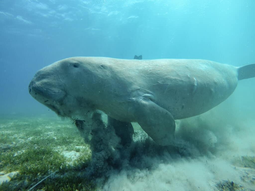 Digital Underwater Photography Specilaty